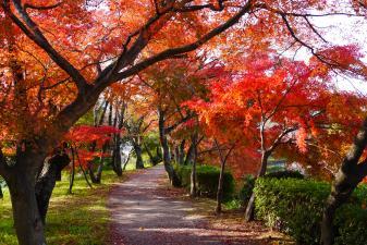 大覚寺 大沢の池