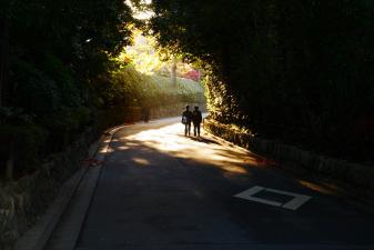 朝の通学路