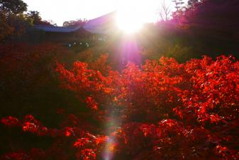 朝日を浴びる東福寺