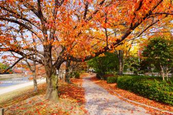 京都のお散歩道