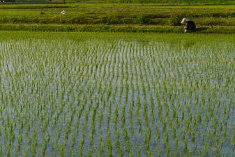 田んぼで作業する農家の人。