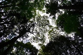 伊勢神宮森の万華鏡