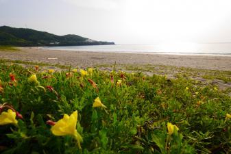 土佐清水大岐の浜