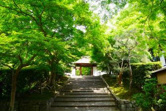 安楽寺の青紅葉