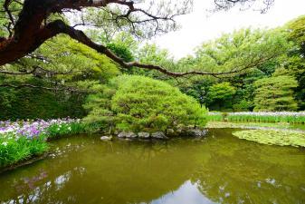 平安神宮中神苑