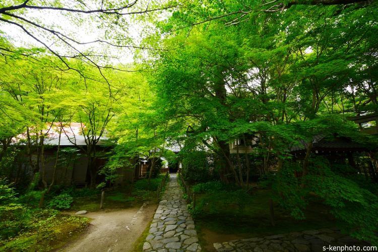 青蓮院の庭園